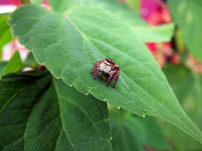 小さい蜘蛛