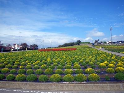 10月21日小菊の郷