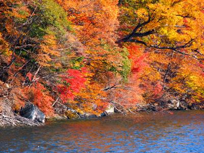 湖面近くは紅葉綺麗