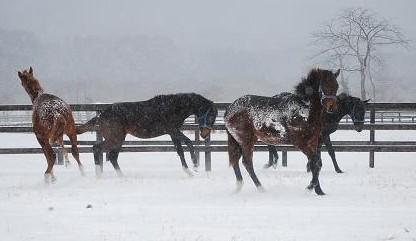 12・大雪・みんな