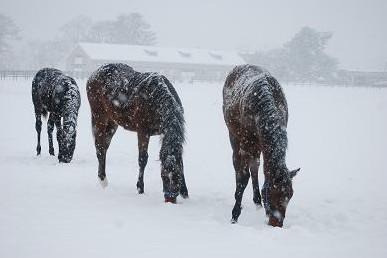 12・大雪・牡馬