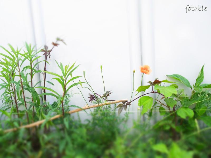 photo20100516_2.jpg