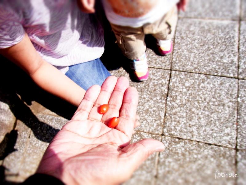 photo20101003_2.jpg