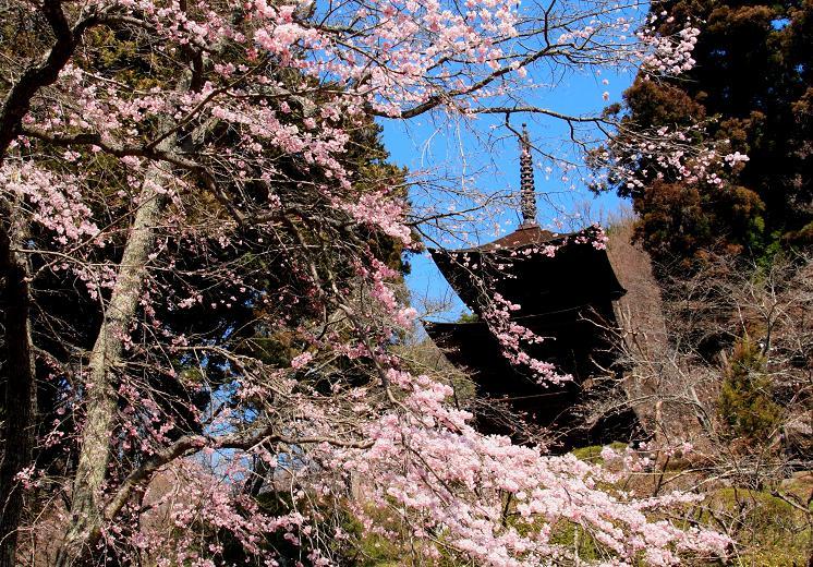 桜咲く見返りの塔