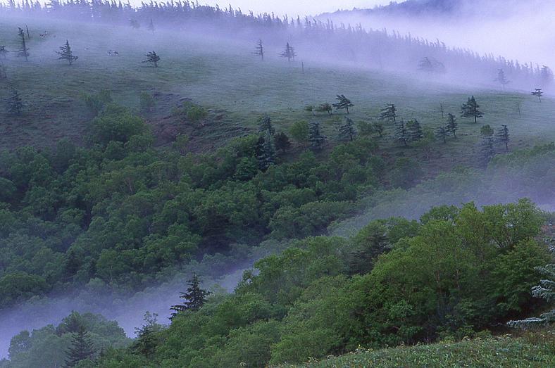 静かな高原