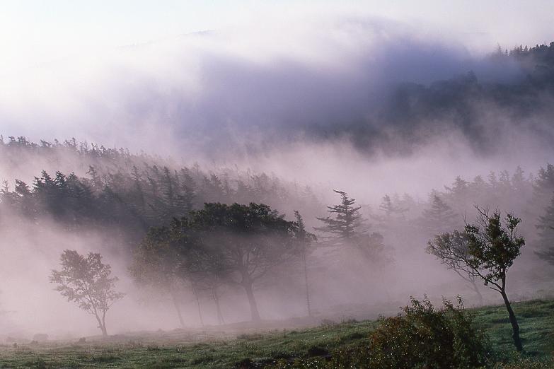 目覚める高原