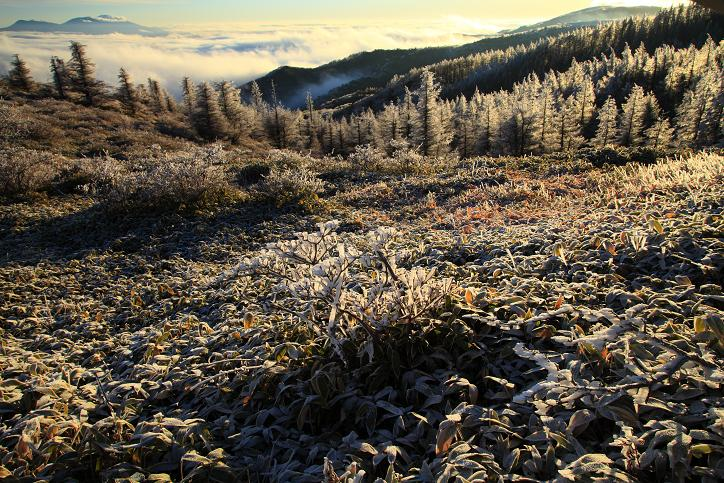 霧氷の高原-1