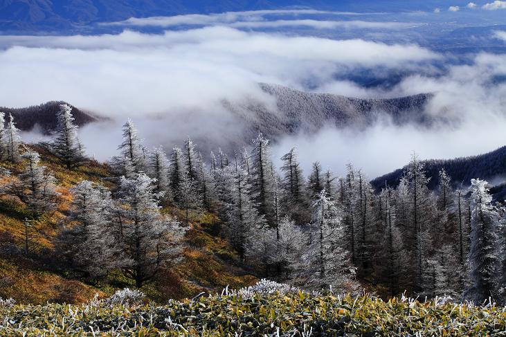 霧氷の高原-2