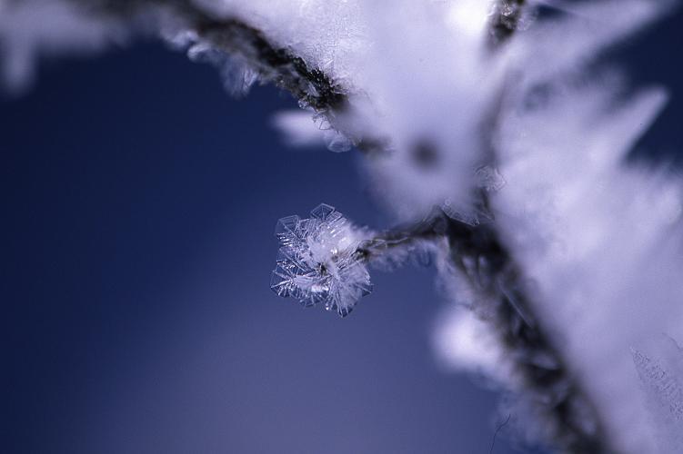 冬の華-2