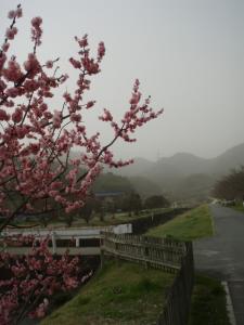 20100321貝殻山02