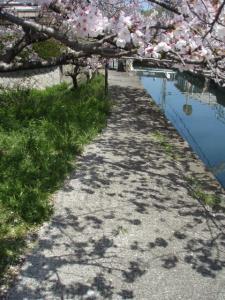 20100408お花見