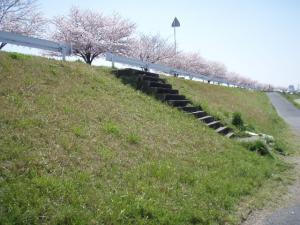 20100408お花見3