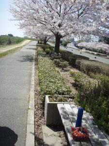20100408お花見4