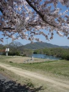 20100408お花見5