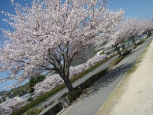20100408お花見7