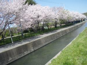 20100408お花見8