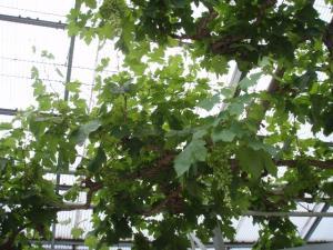 20100802神崎農園