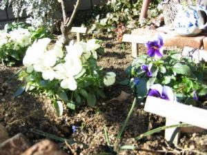 2011 01 18 G冬の花壇