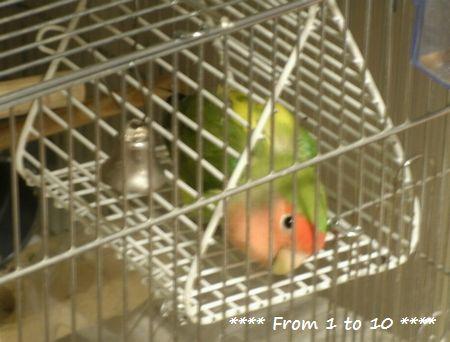 鳥ゆりかご2