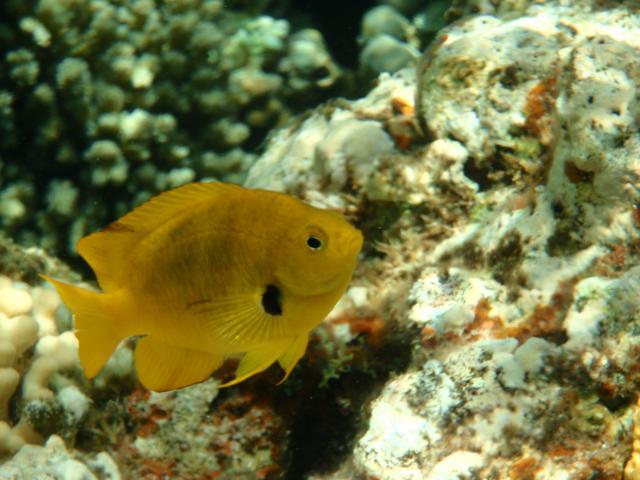 小さい魚もきれい