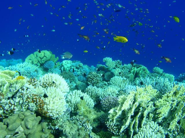 サンゴと魚たち