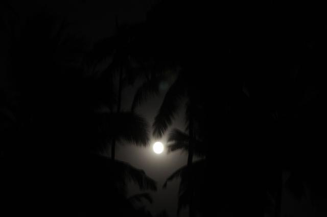 椰子の木と満月