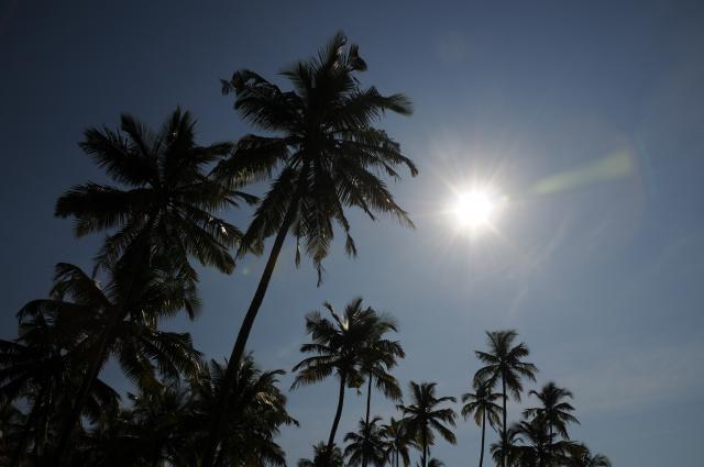 椰子と太陽