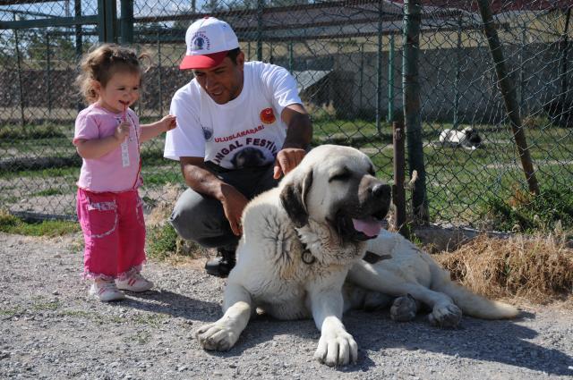 ブリーダーとカンガル犬