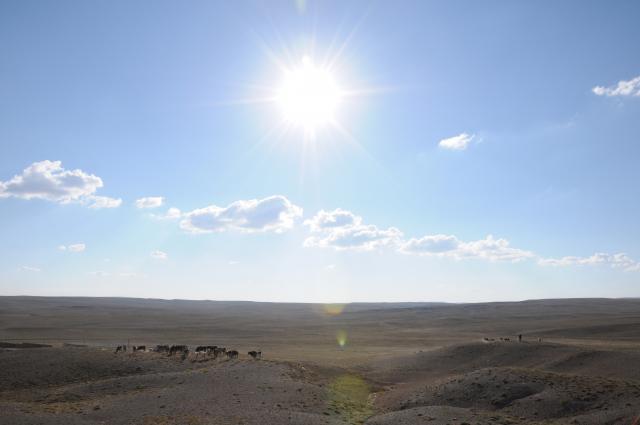 太陽と群れ