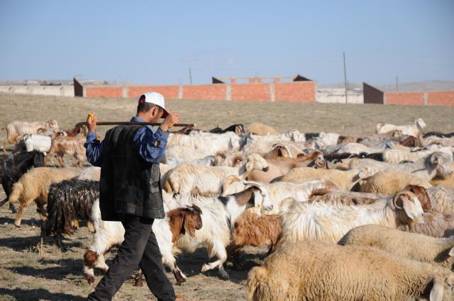 棒を担ぐ羊飼い