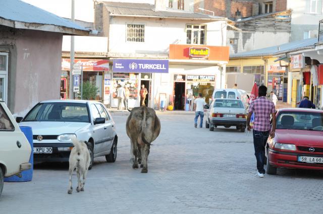 通りを行く牛と犬