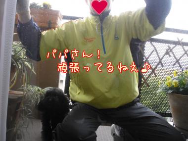 cJSi_[1]