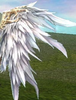 whitewing.jpg
