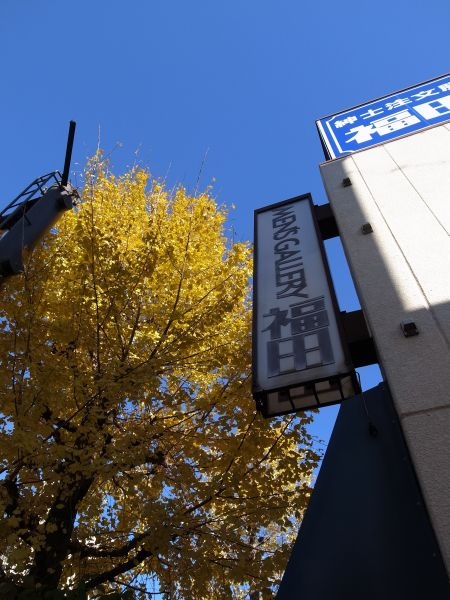 メンズギャラリー福田前の銀杏