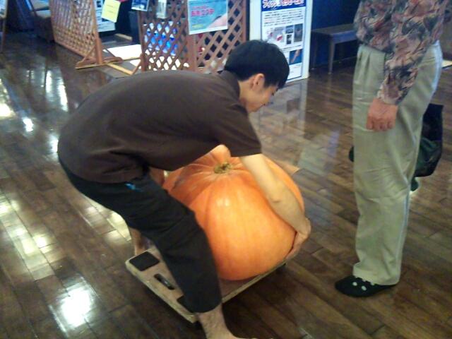 かぼちゃ11a