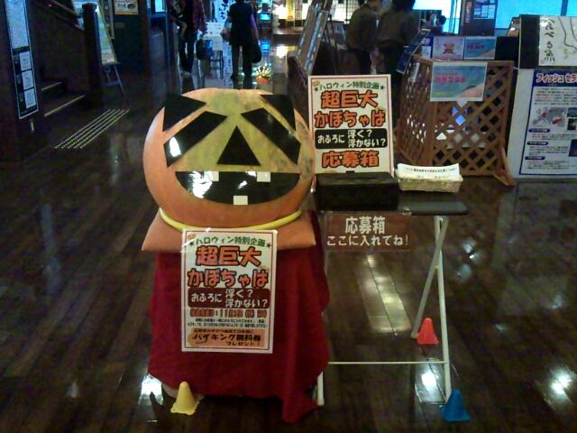 かぼちゃ11b