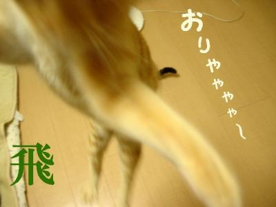 nneko101101-5.jpg