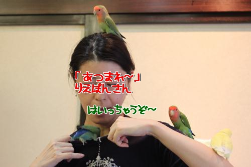 りえぽんさん1