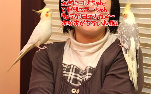 ぽーちゃん5