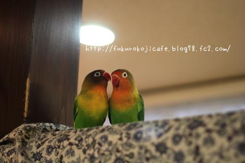 ビビ&プリ1