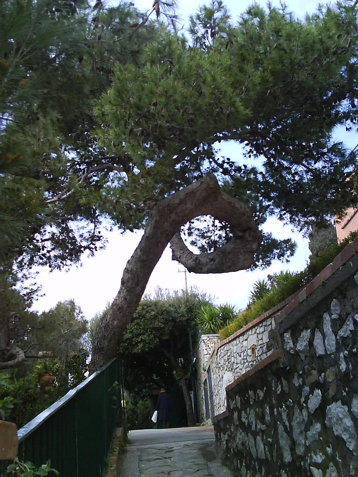 albero grande strano