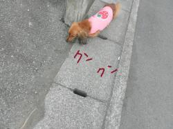 030_convert_20110125114309.jpg