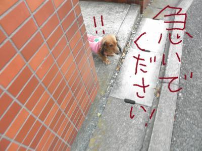 038_convert_20110125114640.jpg