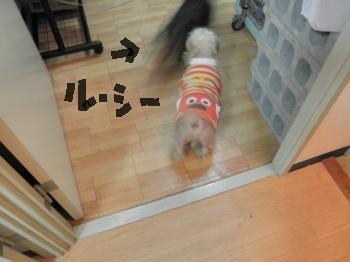 090_convert_20110119135208.jpg