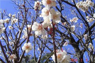 atamibaien2_convert_20100218145428.jpg