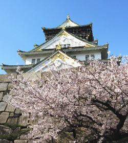 大阪城公園桜