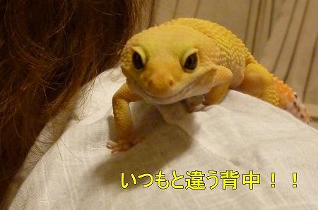 もんちゃん 036