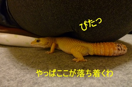 もんちゃん 025