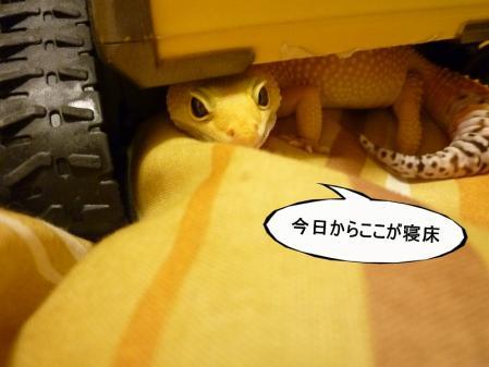 8もんちゃん 045
