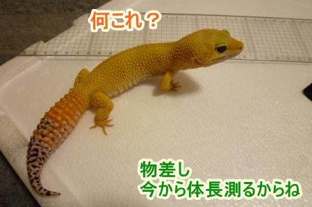 2もんちゃん 002